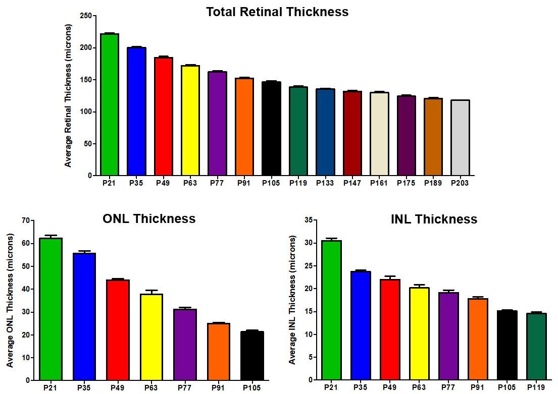 P23H OCT graphs