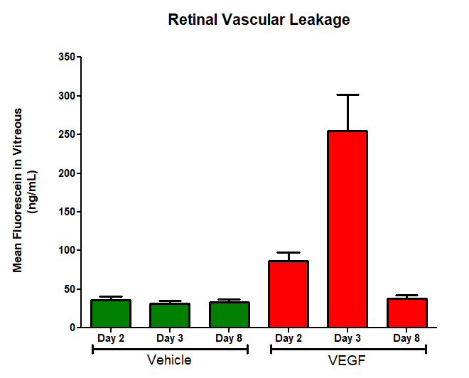 VEGF induced retinal permeability